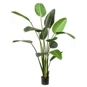 Dagaanbieding - Kunstplant Strelitzia XL dagelijkse aanbiedingen