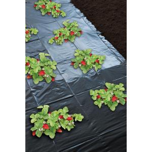 Aardbeienfolie micro-geperforeerd