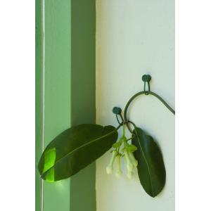 Plantenklemmen