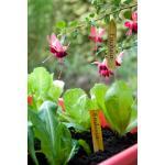 Houten plantenetiketten met ijzerdraad