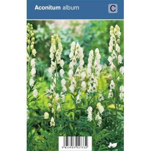 Monnikskap (aconitum album) schaduwplant