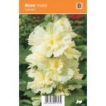 """Stokroos (alcea rosea """"Lemon"""") zomerbloeier"""