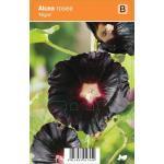 "Stokroos (alcea rosea ""Nigra"") zomerbloeier"