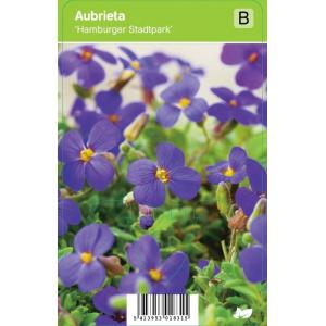 """Randjesbloem (aubrieta """"Hamburger Stadtpark"""") voorjaarsbloeier"""