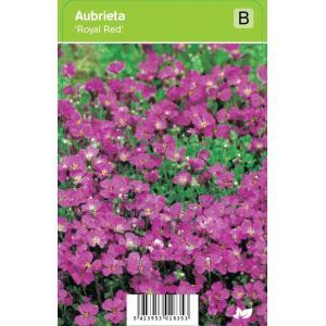 """Randjesbloem (aubrieta """"Royal Red"""") voorjaarsbloeier - 12 stuks"""