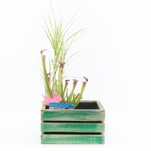 Mini vijver in houten kistje groen
