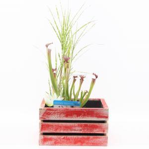 Mini vijver in houten kistje rood