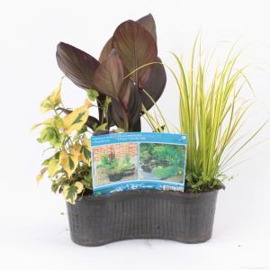Mix waterplanten in ovale vijvermand