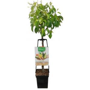 Perenboom mix – fruitbomen
