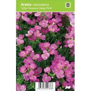 """Rijstebrij (arabis little treasure """"Deep Pink"""") voorjaarsbloeier"""