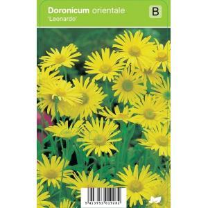 """Voorjaarszonnebloem (doronicum orientale """"Leonardo"""") voorjaarsbloeier"""