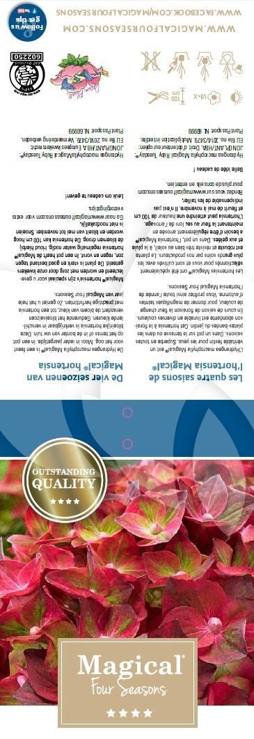 Plantenwinkel Nl Hydrangea Macrophylla Magical Ruby Tuesday