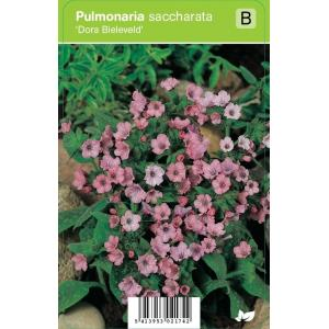 "Longkruid (pulmonaria saccharata ""Dora Bielefeld"") voorjaarsbloeier"
