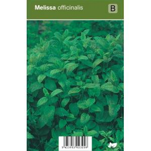 Citroenmelisse (melissa officinalis) kruiden