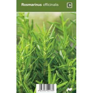Rozemarijn (rosmarinus officinalis) kruiden