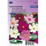 Cosmea grootbloemig bloemzaden - Cosmos Sensation Mix