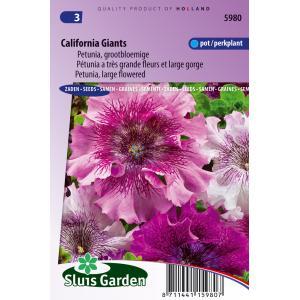 Grootbloemige petunia bloemzaden  California Giants