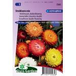 Helichrysum dubbelbloemig bloemzaden - Strobloem Mix