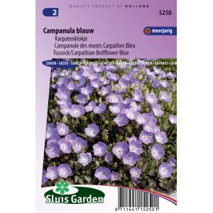 Karpatenklokje bloemzaden - Campanula blauw