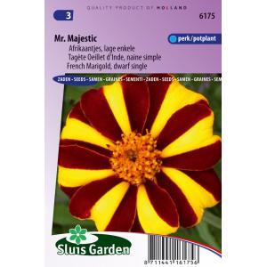 Korting Lage enkele Afrikaantjes bloemzaden – Mr. Majestic