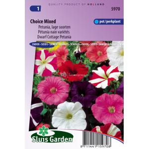 Lage petunia bloemzaden – Choice mixed