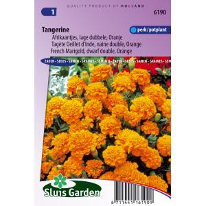 Korting Oranje lage dubbele Afrikaantjes bloemzaden – Tangerine
