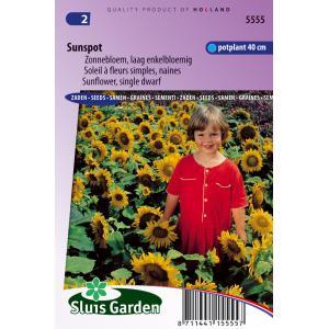 Korting Zonnebloem laag enkelbloemig bloemzaden Sunspot