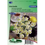 Kamille zaden - Matricaria chamomilla
