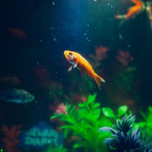 De aanschaf van een aquarium