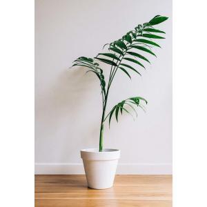 Waarom planten zo nuttig zijn