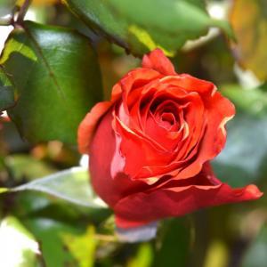 Tuintips April -  beplanting & de eetbare tuin