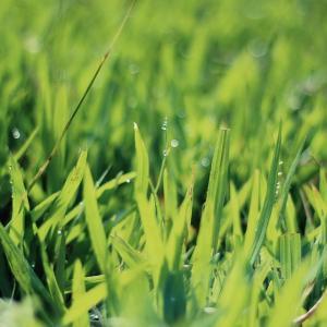 Tuintips April - het gazon