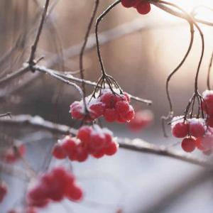 Tuintips Januari - beplanting