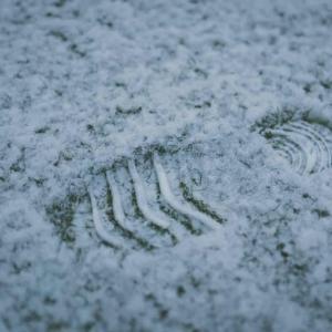 Tuintips Januari - het gazon