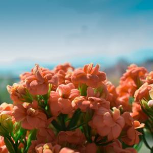 Tuintips Juli - beplanting