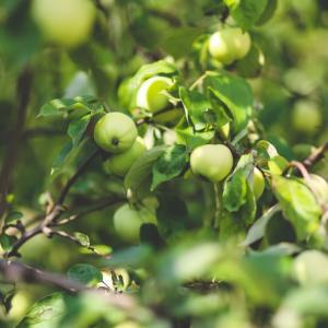 Tuintips Juni - beplanting