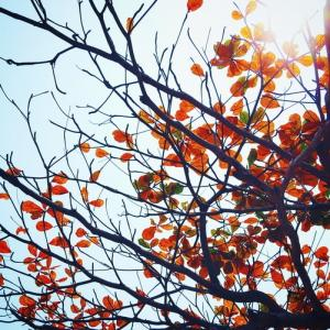 Tuintips November - beplanting