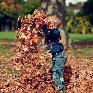 Tuintips Oktober - algemeen