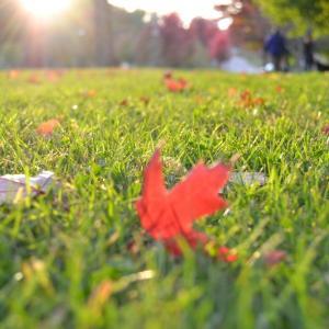 Tuintips Oktober - het gazon